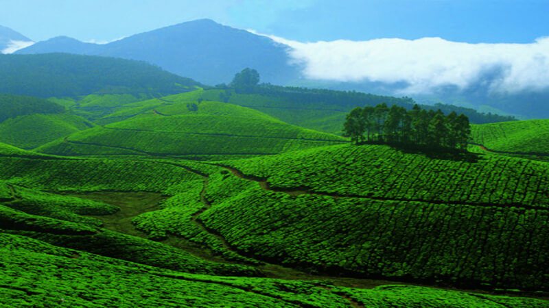 media_gallery-2018-11-28-10-A_day_to_take_in_all_of_Munnar123_9dc58669435907c69235cc499832639f.jpg