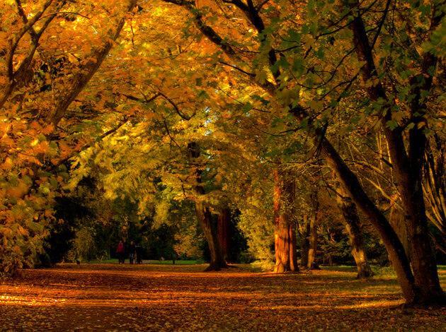 Westonbirt arboretum - Image
