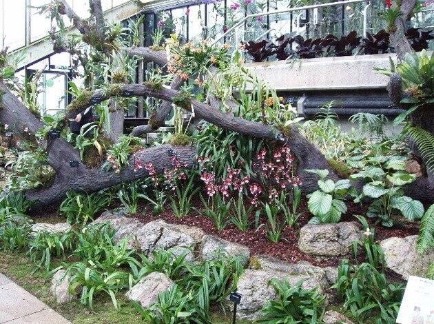 Orchids Festival - Events in London in February