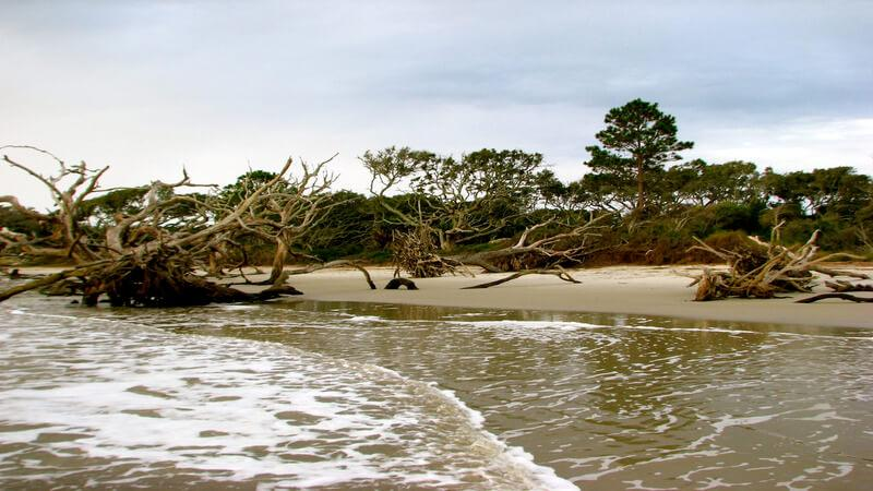 Driftwood Beach for your pets