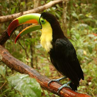 Belize Zoo - A wildlife park in Belize City