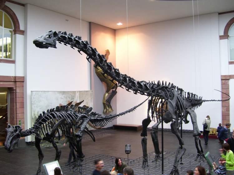 The Senckenberg Museum of Natural History