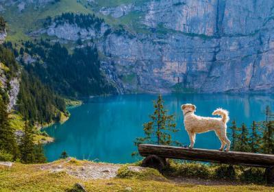 15 Most Terrific Hiking Trails In Switzerland!