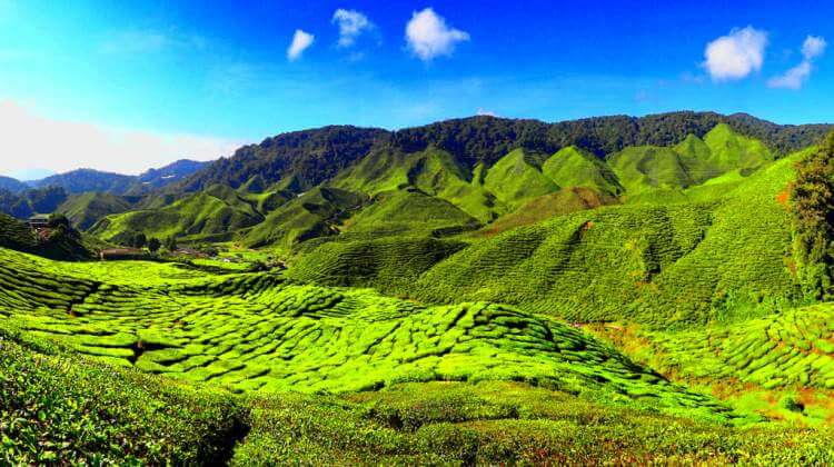 popular place to visit - Cameron Highlands - Photo
