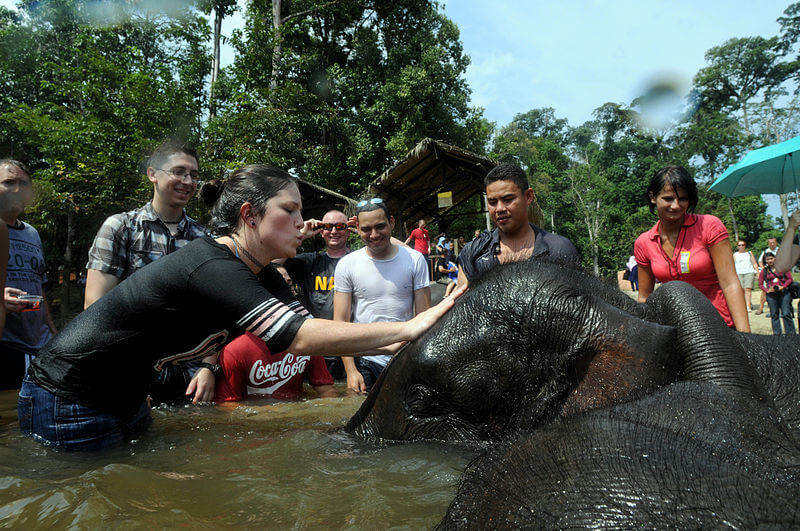 Gentle Giants in kuala gandah conservation centre - image