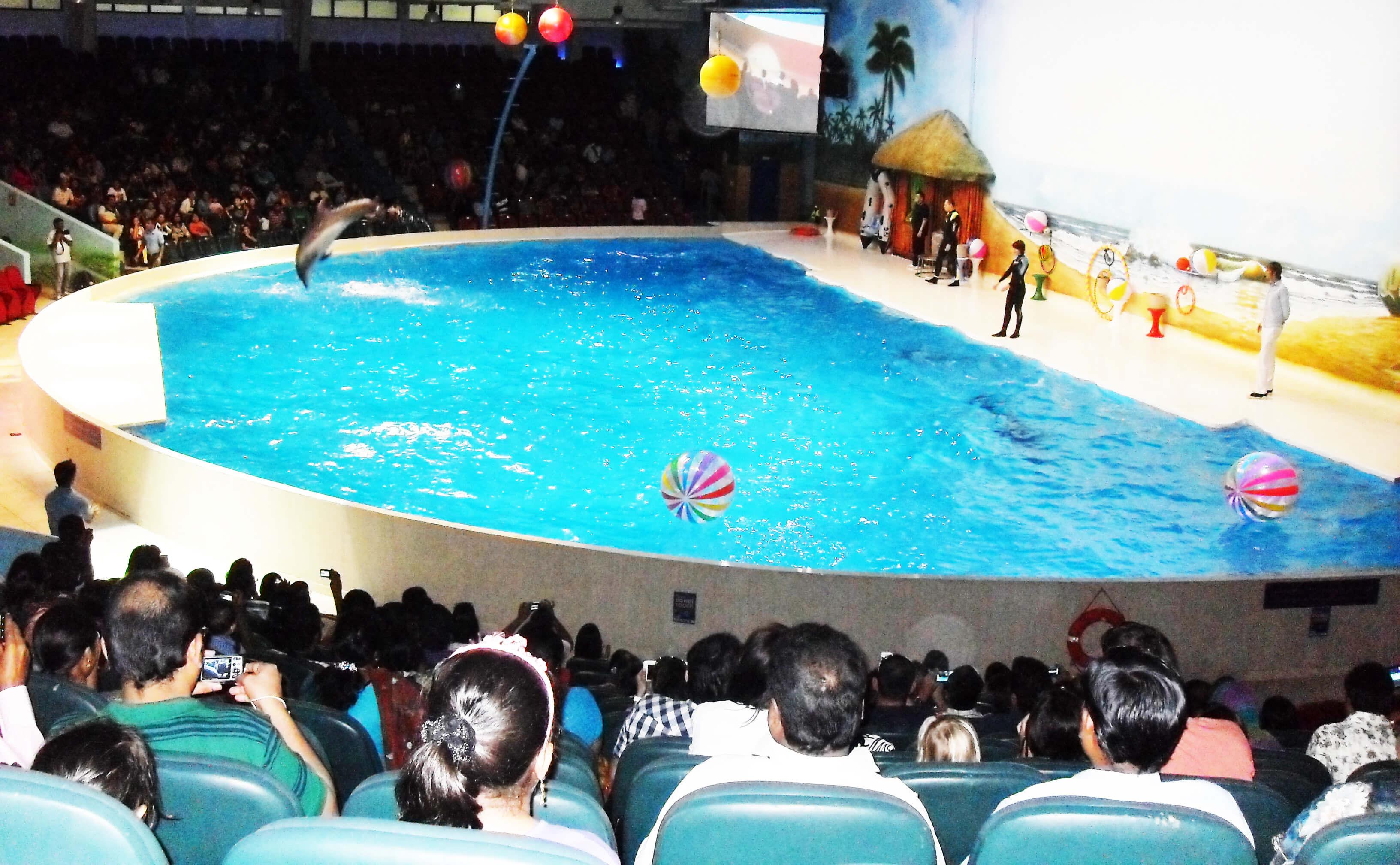 Dubai Dolphinarium - image
