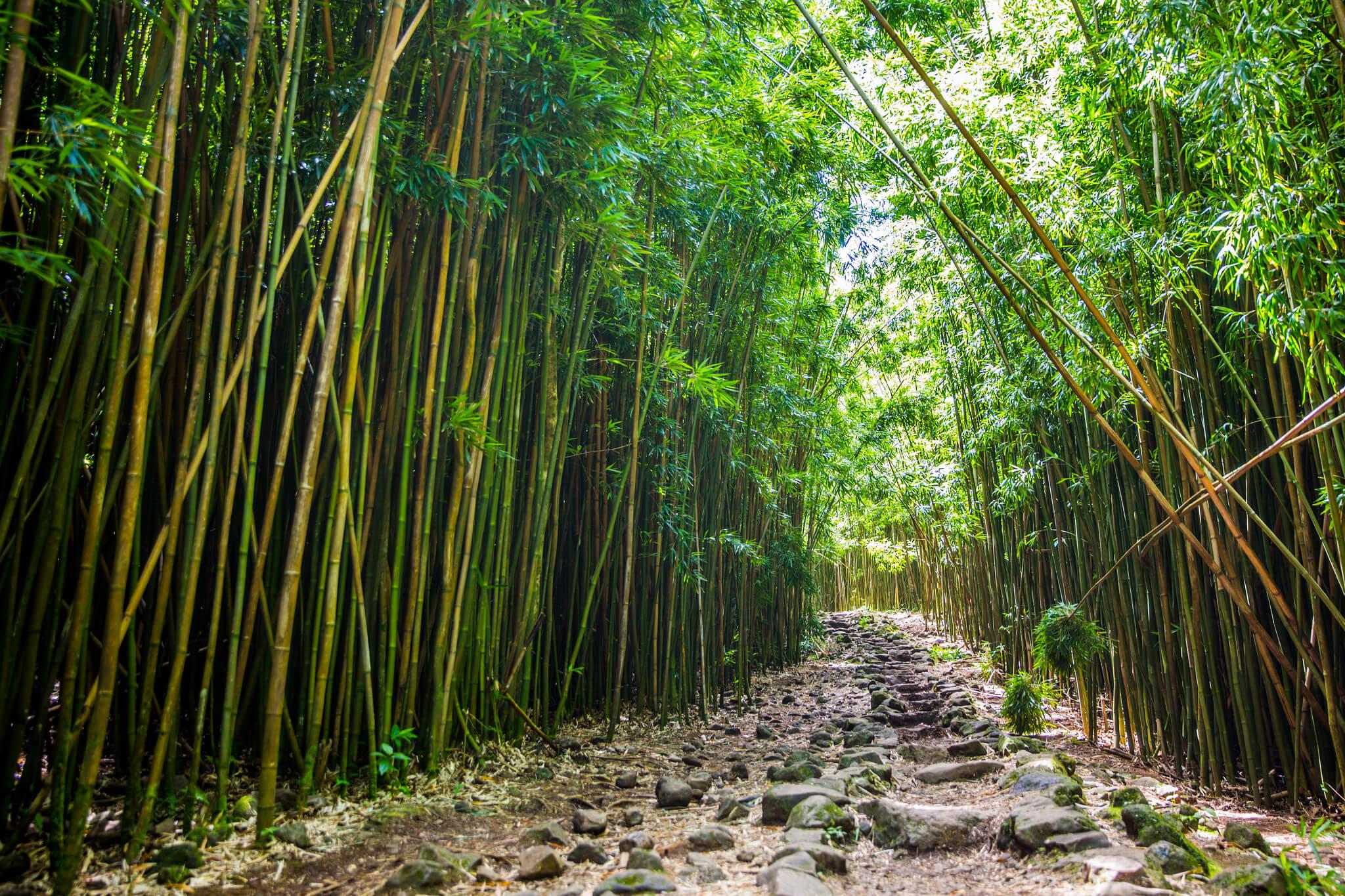 Pipiwai Trail - Image