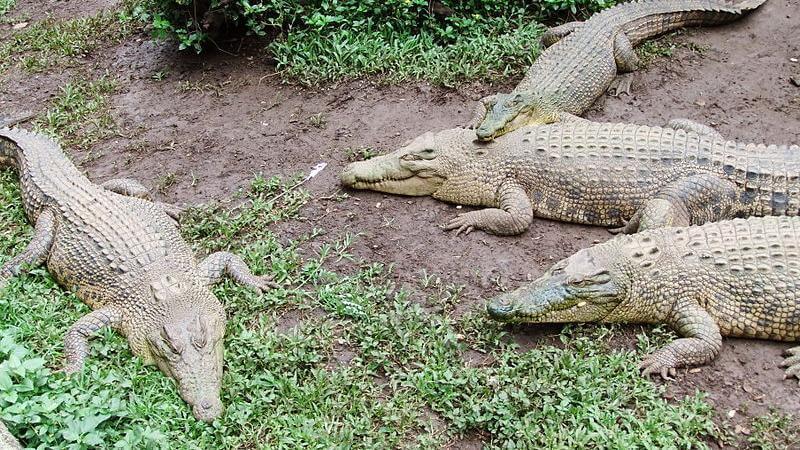 Bandung Zoo - Image