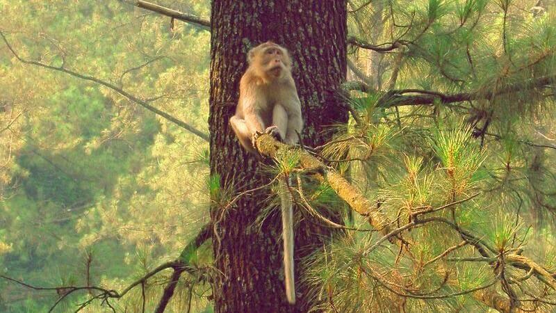 natural sight in Bandung - Djuanda Forest Park