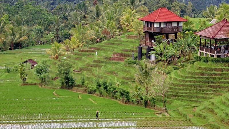 Bali Best Tropical Island