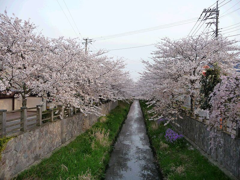 Best places to go in Chiba - Image