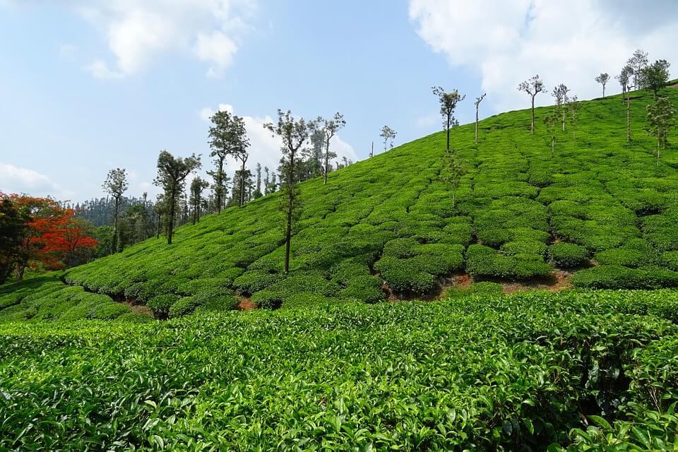 Kudremukh and Coffee Estates, Chikmagalur