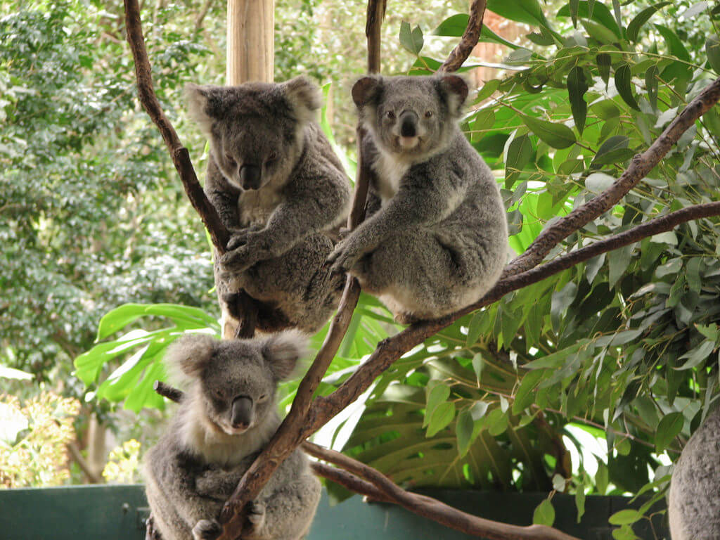 Take your kids to the zoos of Australia - Image