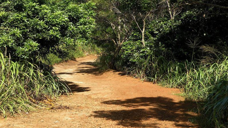 Molokai Forest Reserve Road Trail