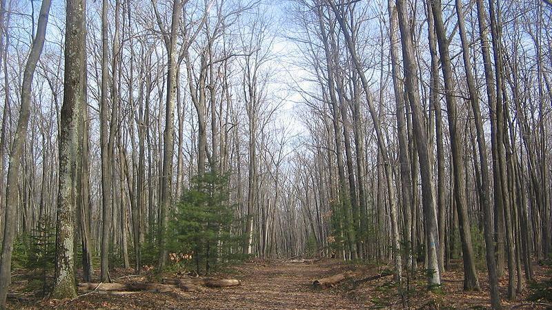 Quehanna Trail Hiking
