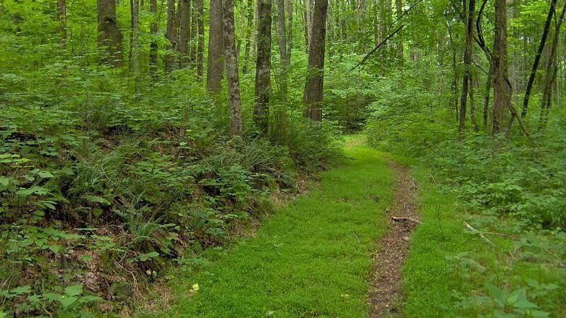Standing Stone Trail Hiking