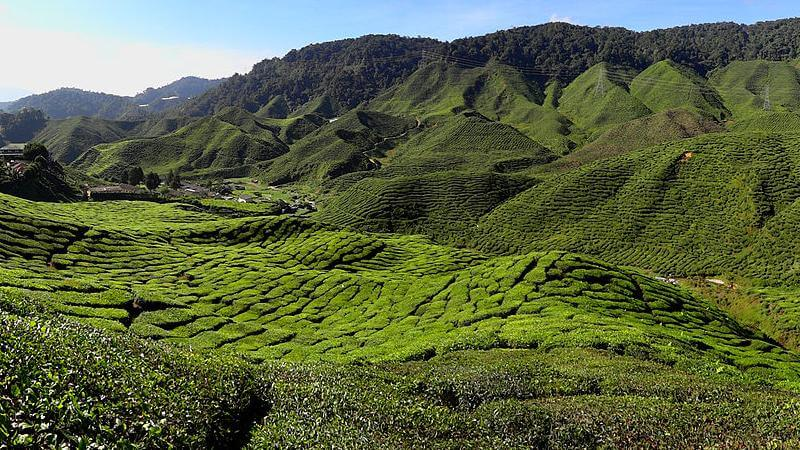 Cameron Highlands District