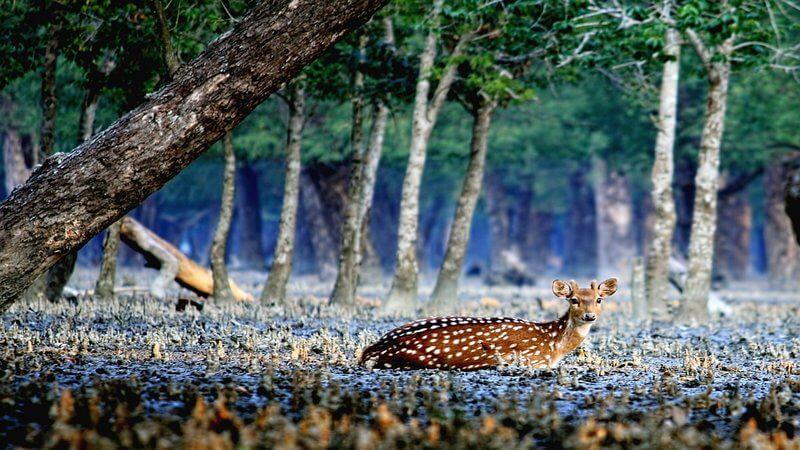 Sundarbans Mangrove Forest