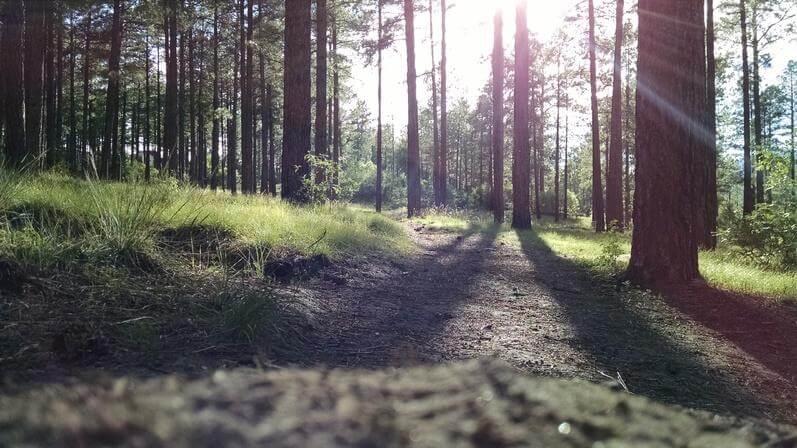 Gilbert Hills State Forest