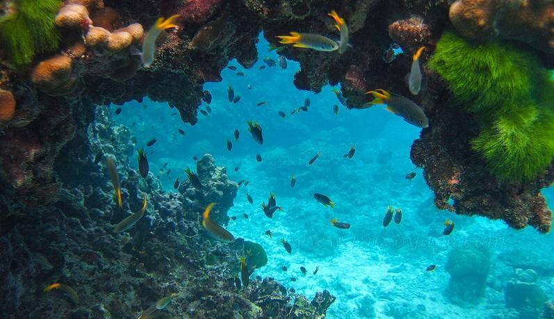 places for scuba diving in india