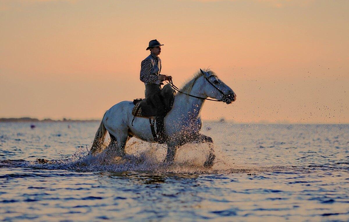 media_gallery-2019-09-23-11-jumper_horse_horses_horseback_riding_animal_hiking_water_plan_802107_a19b9c1b70d4e357f4f07dc98ef6ed1d.jpg