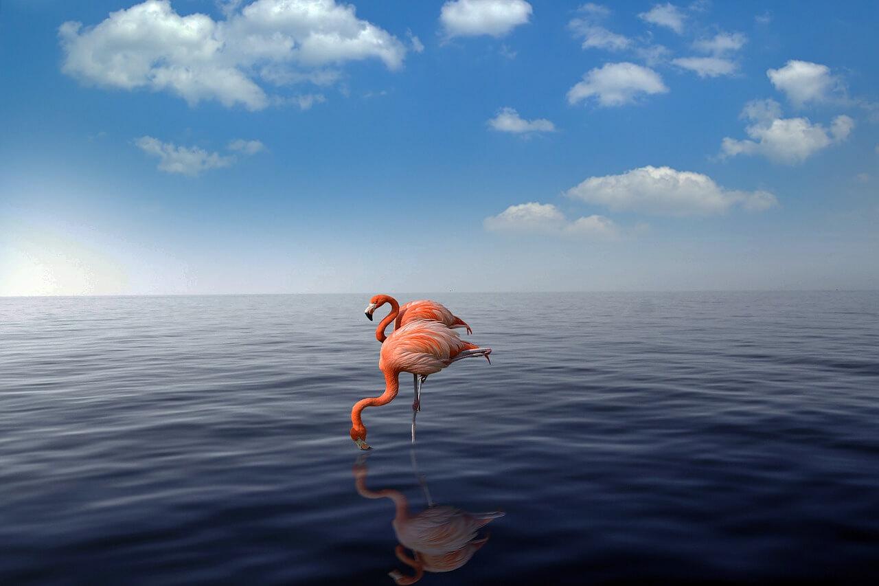 media_gallery-2020-03-2-8-flamingo_4026050_1280_990a9ed8a819773769de5e521011bb6c.jpg