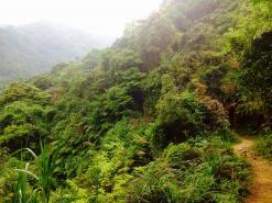 Tai Mo Shan Waterfall Adventure