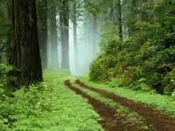 Knysna Forest Day Tour