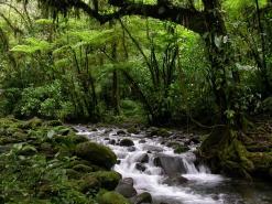 Nature Potpourri