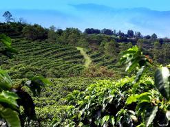 Doka Coffee Plantation - Poas Volcano National Park - La Paz Waterfalls And Gardens