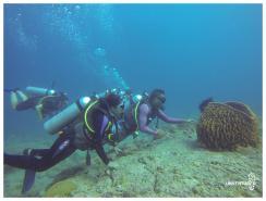 Andaman Scuba Diving Tour