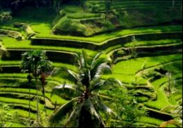 Ubud Bali Rice Terraces, Temples And Volcano Tour With Lunch