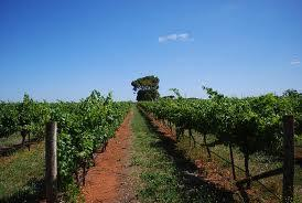 Charles Sturt University Winery