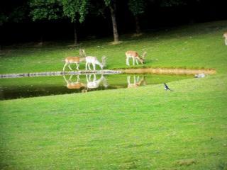 Gayeulles Park