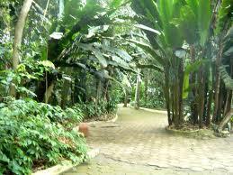 Bosque Da Ciencia
