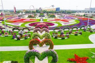 Dubai Miracle Garden Tours