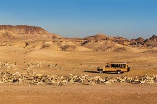 Arabian Wildlife Park