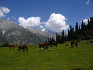 Image of Sonamarg