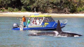 Glass Bottom Boat Whitianga Scenic Cruise