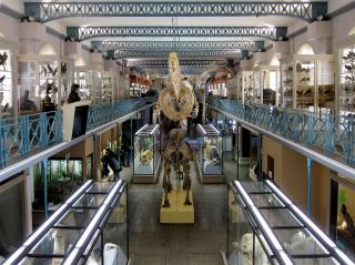 Museum Of Natural History Or Musée D'histoire Naturelle De Lille