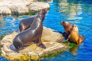 Sea Lion Interaction