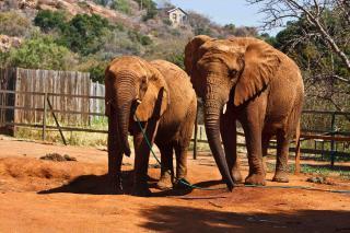 Elephant Sanctuary Hartbeespoort Dam