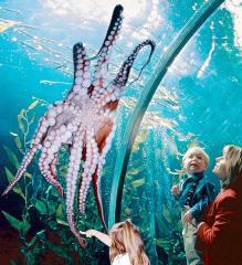 Aquarium Of The Bay