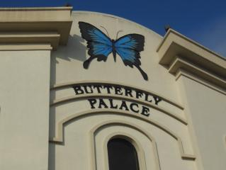 The Butterfly Palace And Rainforest Adventure