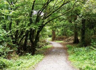 Ballyseedy Woods