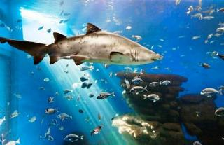 Palma Aquarium