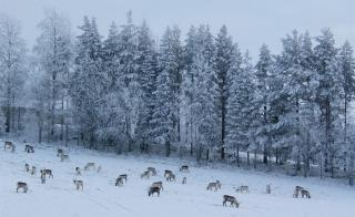 gabba reindeer safari park