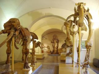 Trieste Natural History Museum