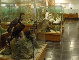Museo De Historia Natural Luis Iglesias