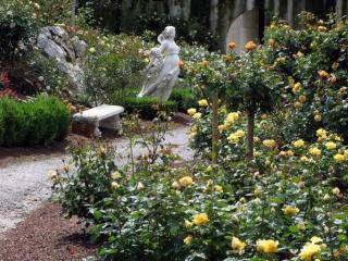 Roseraie De Saint Vincent